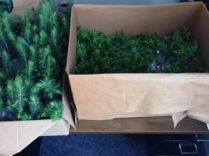 Trees in box