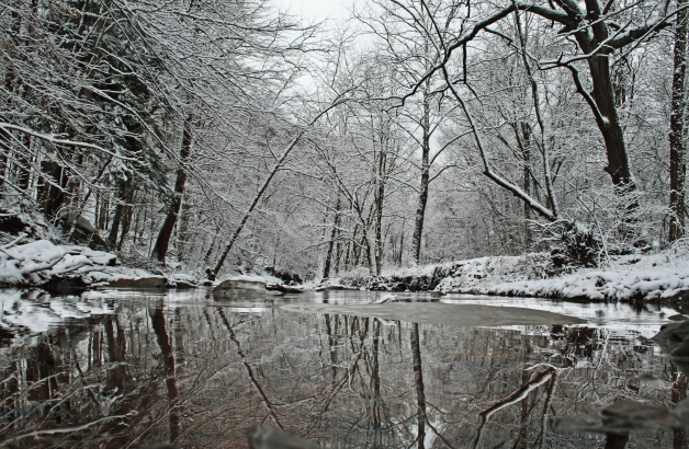 winter-creek-reflection-snow-covered-trees_-_west_virginia_-_forestwander
